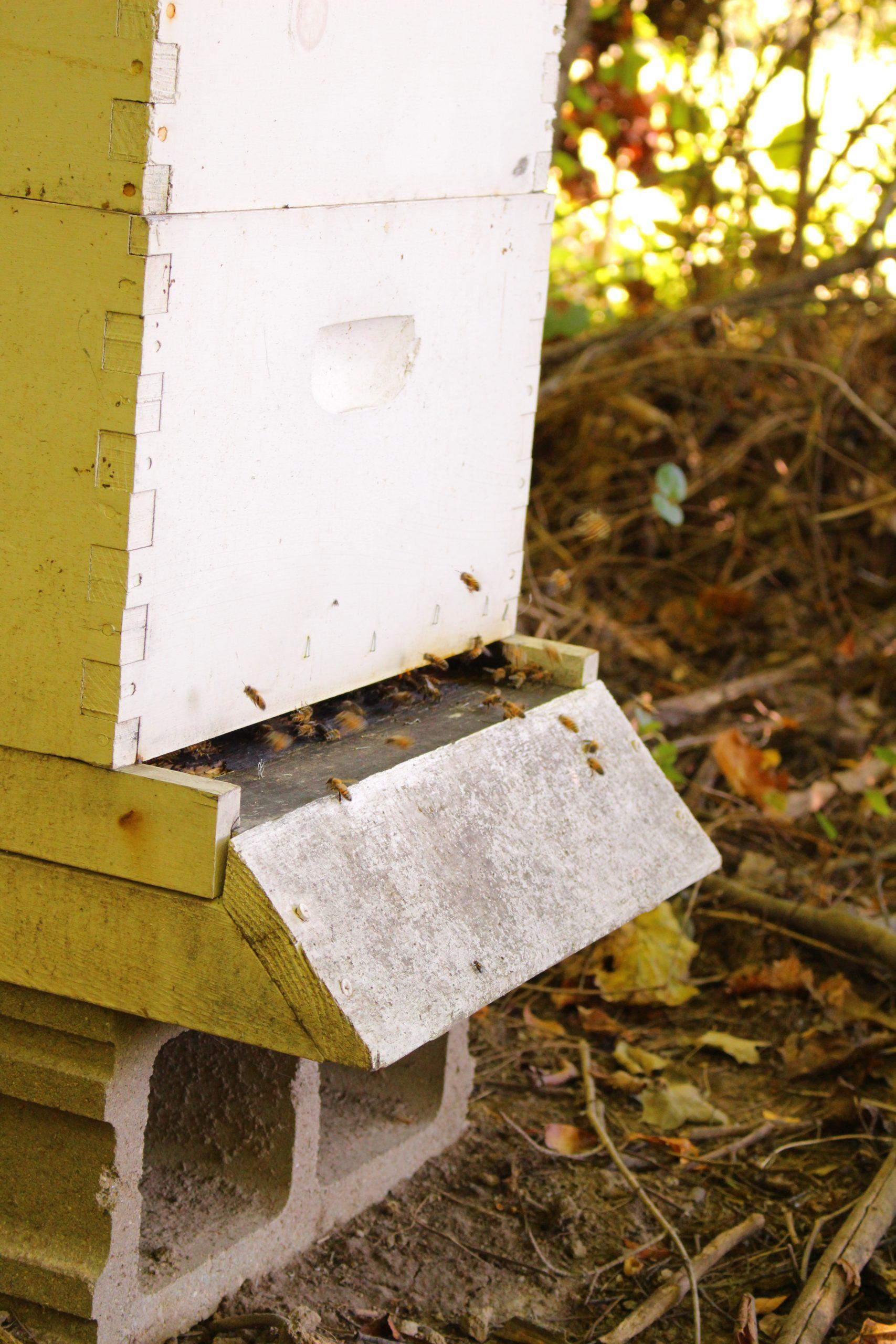 Beekeeping Primer  – Getting Set Up