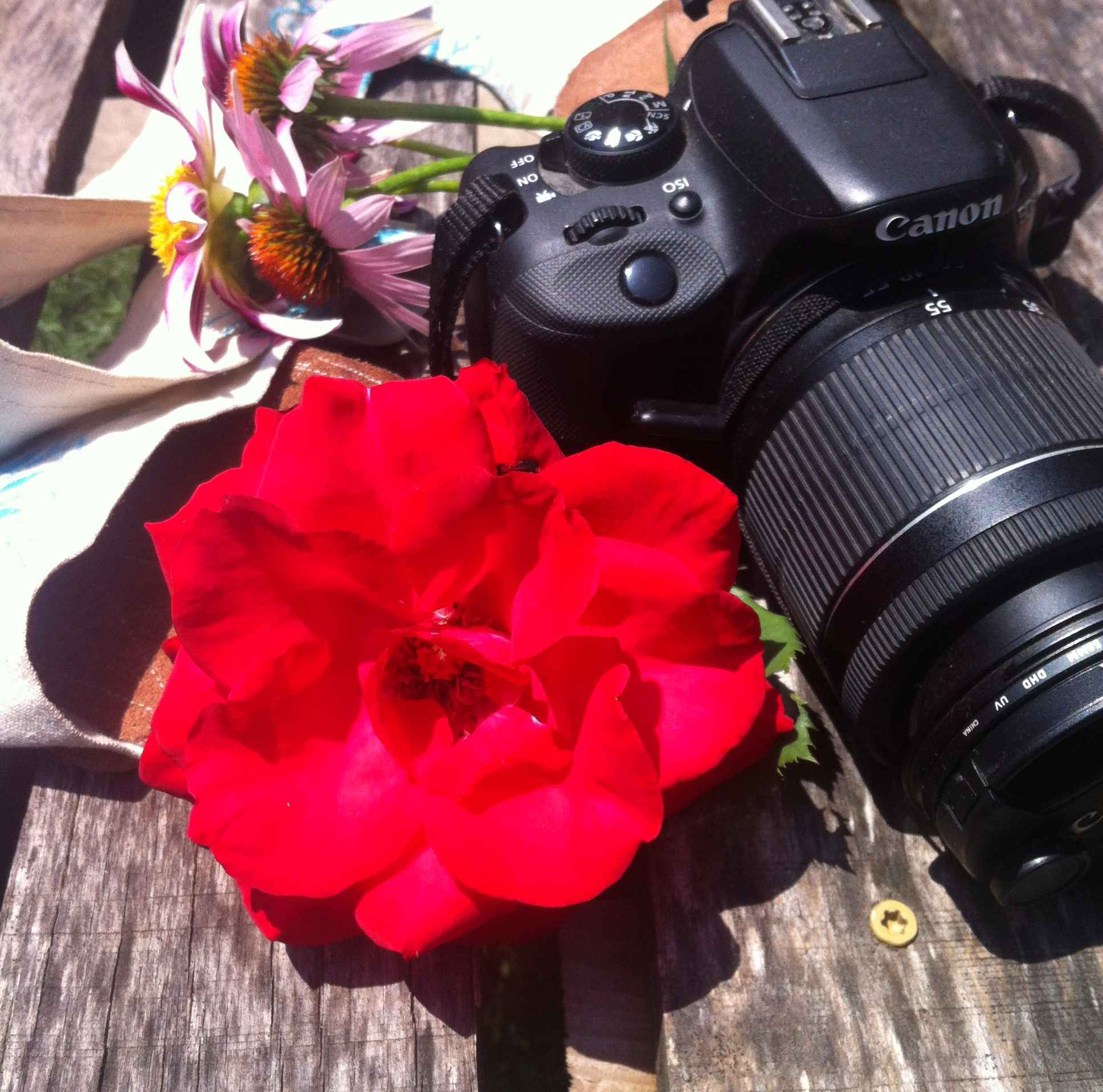 Zoom In – Finding Beauty and Joy in Life