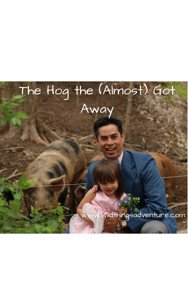The Hog That (Almost) Got Away