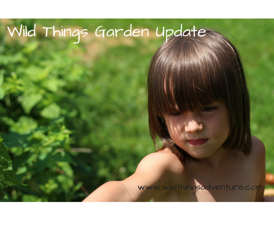 Wild Things Garden Update