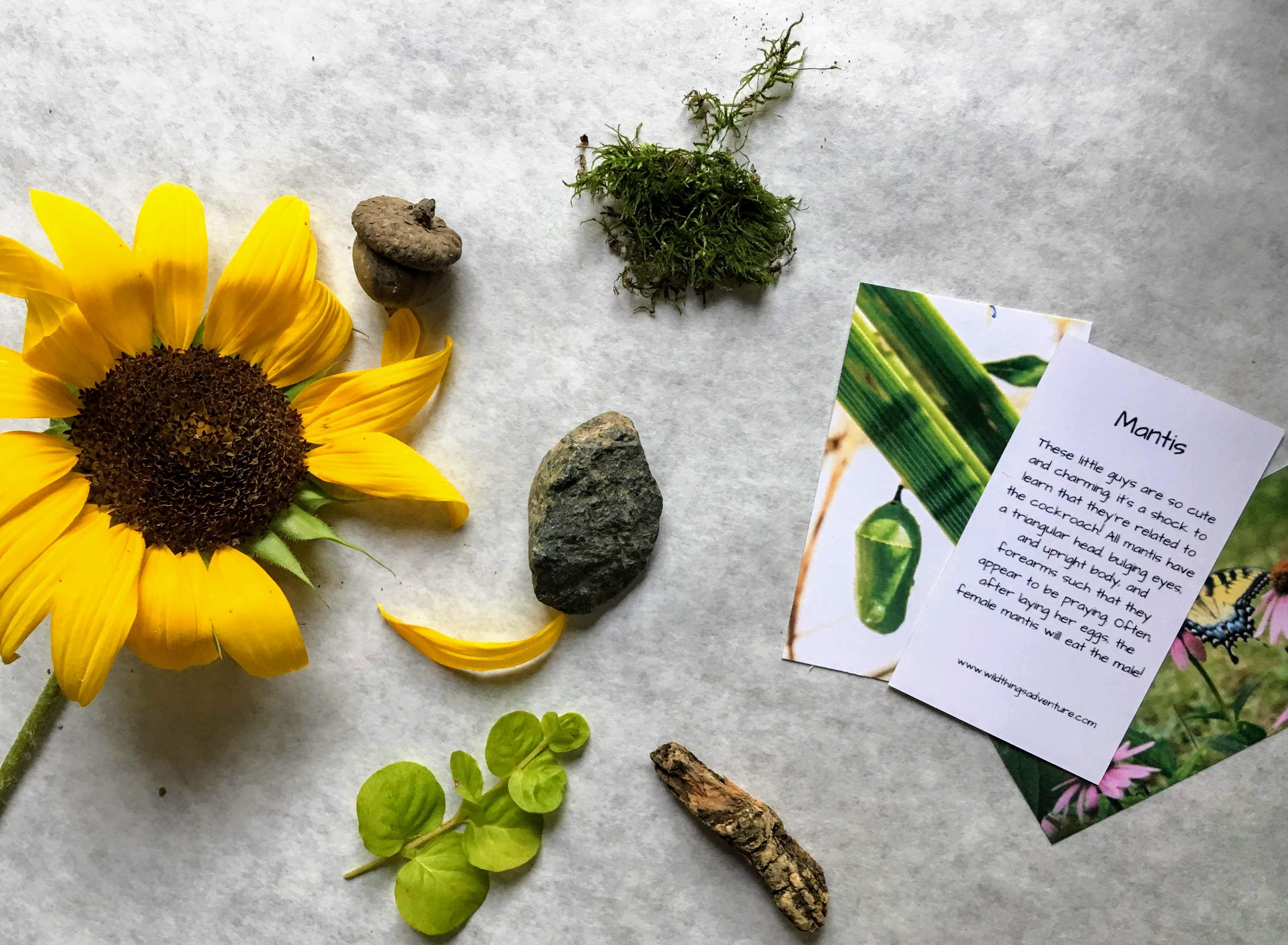 Adventure Boxes - Monthly Nature Activities Delivered to your Door Twelve Month Subscription